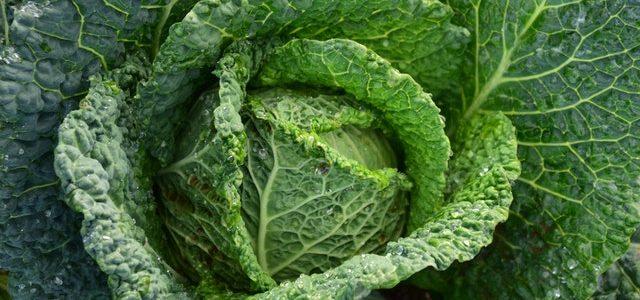 Zeljna juha: dieta za hujšanje